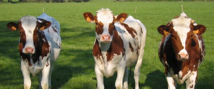MF0726_2 Producción de Animales y Productos Animales Ecológicos
