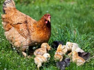 UF0207 Productos Animales Ecológicos