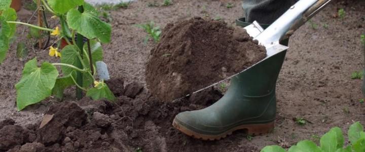 UF1596 Cultivo de Material Vegetal y Céspedes en Vivero