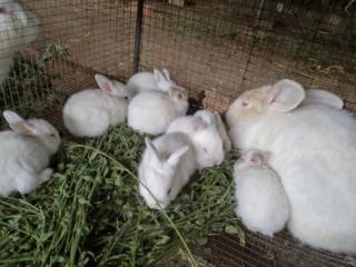 MF0282_2 Producción de Conejos para Reproducción y Obtención de Carne