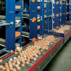 UF0017 Proceso de Fecundación y Operaciones de Recepción y Manejo de Aves y Huevos