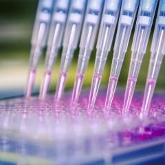 UF2076 Organización, Documentación y Comunicación de Datos Biotecnológicos