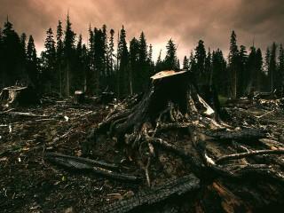 UF0736 Buenas Prácticas Ambientales en la Solución de la Problemática Socio-Ambiental