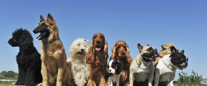 Curso gratis MF1741_2 Técnicas de Adiestramiento de Base Aplicadas a Perros online para trabajadores y empresas
