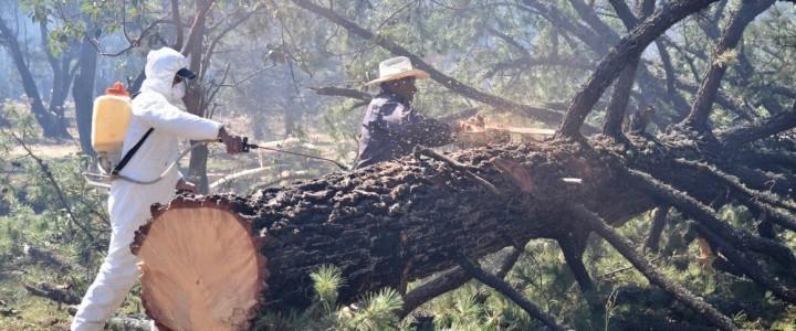 Curso gratis UF1265 Selvicultura y Control de Plagas Forestales online para trabajadores y empresas