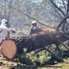UF1265 Selvicultura y Control de Plagas Forestales
