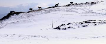 UF2285 Análisis Diagnóstico y Evaluación en Actividades de Conducción en Baja y Media Montaña