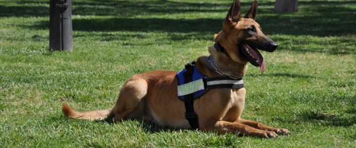 Técnico en Seguridad Privada con Unidad Canina