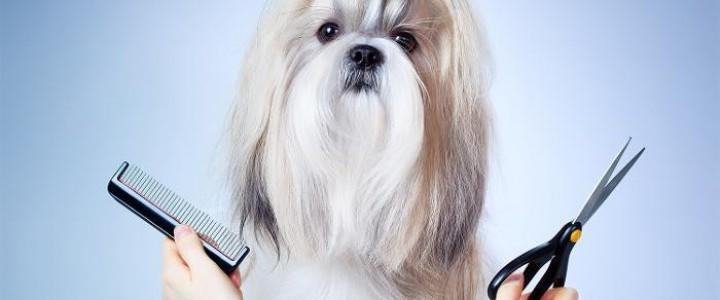 Curso gratis Profesional de Estética y Peluquería Canina y Felina online para trabajadores y empresas