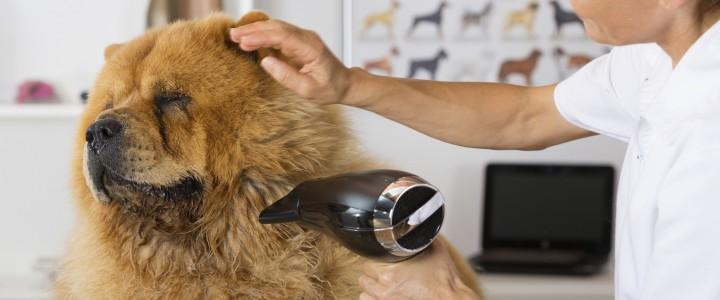 Curso gratis Higiene, cuidados básicos y peluquería canina y felina online para trabajadores y empresas
