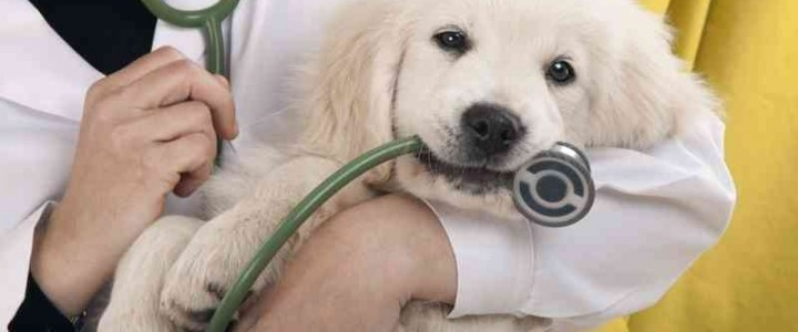 Curso gratis Homeopatía veterinaria aplicada online para trabajadores y empresas