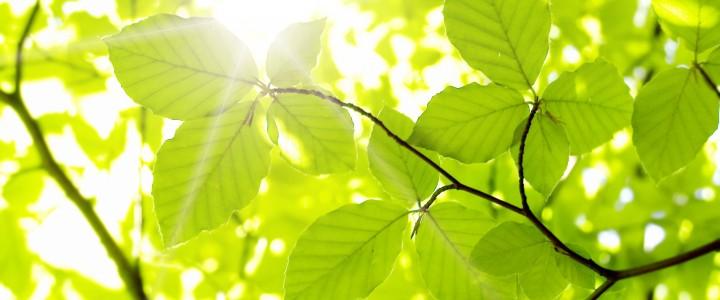 Curso gratis Máster Profesional en Naturopatía y Terapias Naturales online para trabajadores y empresas