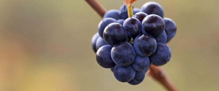 Curso gratis Online de Viticultura, Enología y Cata: Práctico online para trabajadores y empresas