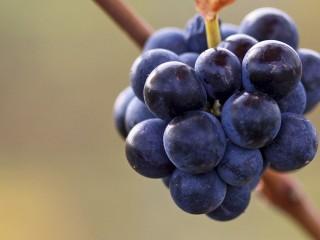 Curso Online de Viticultura, Enología y Cata: Práctico
