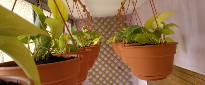 Curso gratis Postgrado de Técnico en Jardinería online para trabajadores y empresas