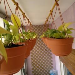 Postgrado de Técnico en Jardinería