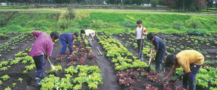 Curso gratis Determinación del estado sanitario de las plantas, suelo e instalaciones y elección de los métodos de control. AGAC0108 - Cultivos herbáceos online para trabajadores y empresas