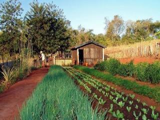 Determinación del estado sanitario de las plantas, suelo e instalaciones y elección de los métodos de control. AGAH0108 - Horticultura y floricultura