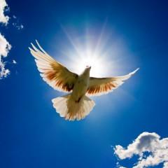 Experto en Educación para la Paz y Gestión de la Convivencia