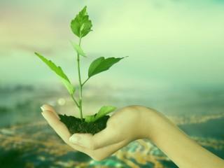 Técnico Profesional en Evaluación de Impacto Ambiental