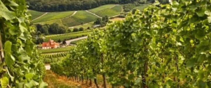Curso gratis El suelo de cultivo y las condiciones climáticas. AGAC0108 - Cultivos herbáceos online para trabajadores y empresas