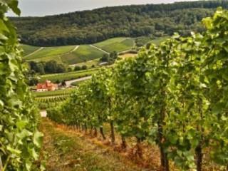 El suelo de cultivo y las condiciones climáticas. AGAC0108 - Cultivos herbáceos