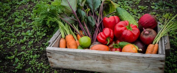 Curso gratis Agricultura Ecológica online para trabajadores y empresas