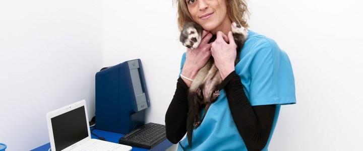 Curso gratis Especialista en Urgencias Veterinarias y Quirófanos online para trabajadores y empresas
