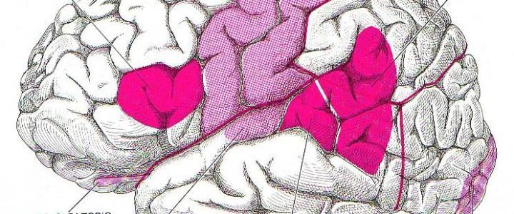 Experto en Anatomía, Fisiología y Neurología del Habla y del Lenguaje