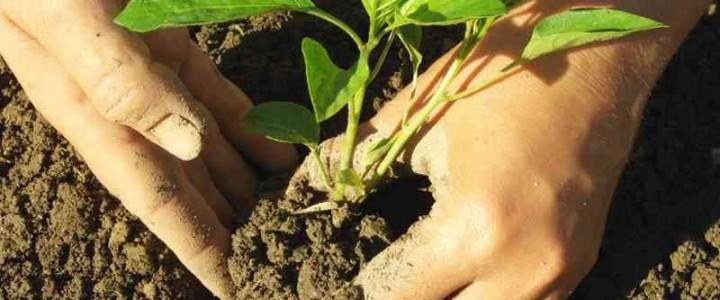 Curso gratis UF0387 Técnicas de Cultivo online para trabajadores y empresas