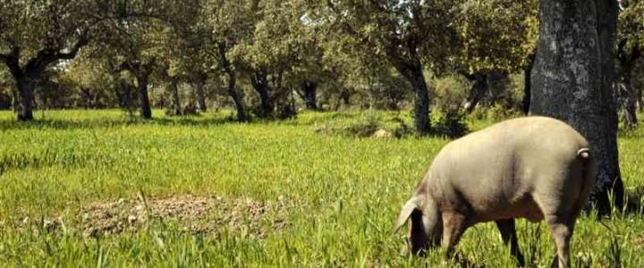 Curso gratis MF0004_2 Producción de Cerdos de Renuevo, Reproductores y Cerdos Lactantes online para trabajadores y empresas