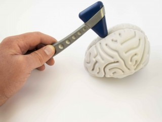 Especialista en Neuroanatomía y Neurología Funcional