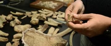 Especialista en Paleontología
