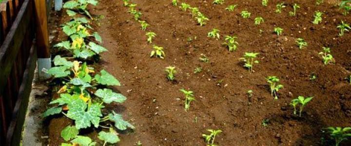 Curso gratis AGAF0108 Fruticultura online para trabajadores y empresas