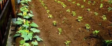 AGAF0108 Fruticultura