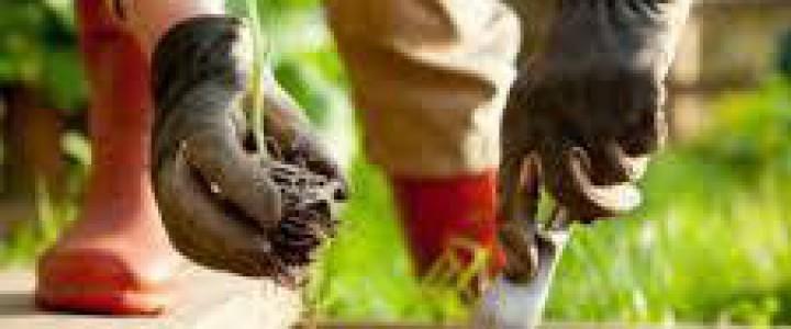 Curso gratis AGAH0108 Horticultura y Floricultura online para trabajadores y empresas