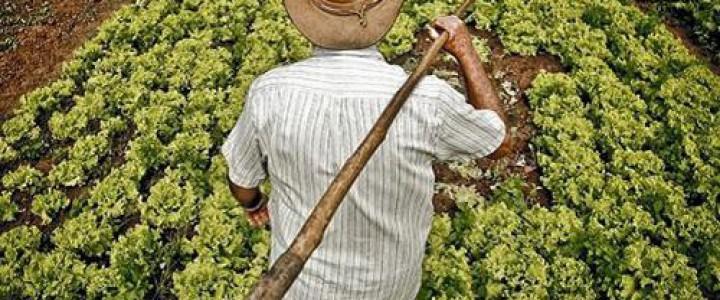 Curso gratis AGAX0208 Actividades Auxiliares en Agricultura online para trabajadores y empresas