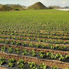 MF0519_1 Operaciones Culturales en los Cultivos y de Mantenimiento de Instalaciones en Explotaciones Agrícolas