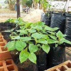 MF1479_2 Propagación de Plantas en Vivero