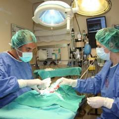 MF1589_3 Hospitalización de Animales