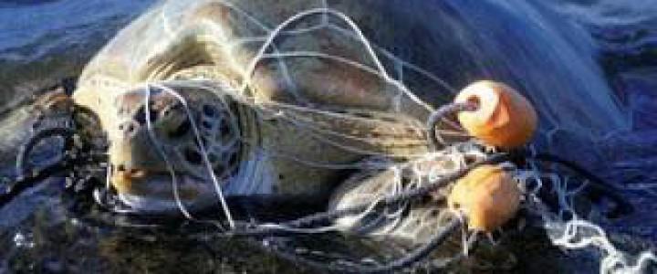 Perito Judicial en Contaminación Marina