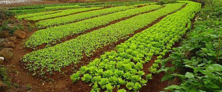 Preparaci n del medio de cultivo agao0208 instalaci n y for Preparacion de jardines