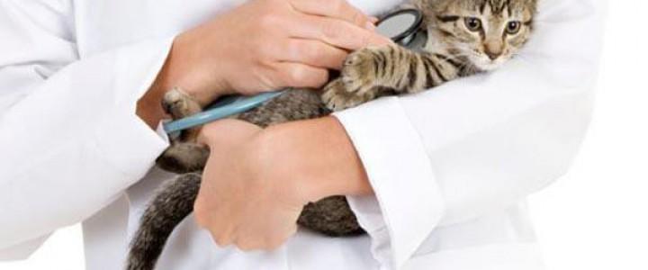 Certificación en Análisis de Laboratorios Clínicos para Titulados Universitarios en Veterinaria