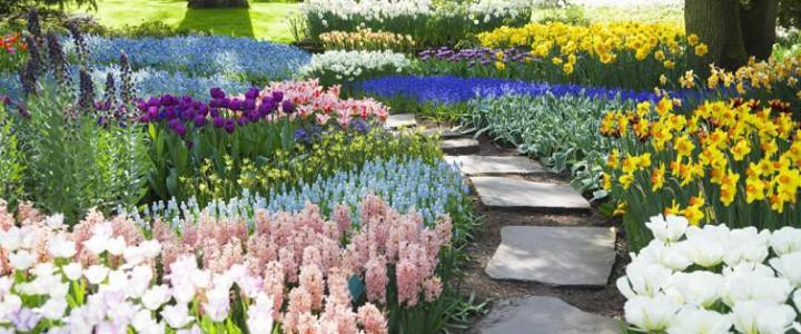 Curso gratis en jardiner a dise o creaci n y for Curso de diseno de jardines