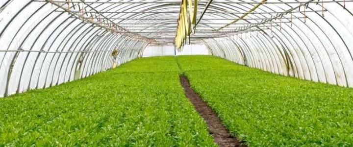 UF0161 Operaciones Auxiliares de Abonado y Aplicación de Tratamientos en Cultivos Agrícolas