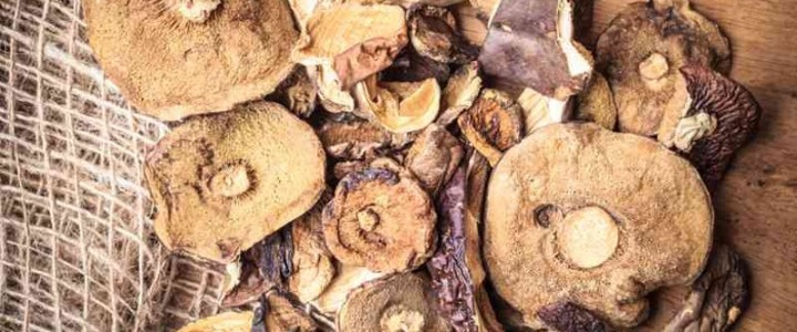 UF0966 Recolección de Hongos Silvestres