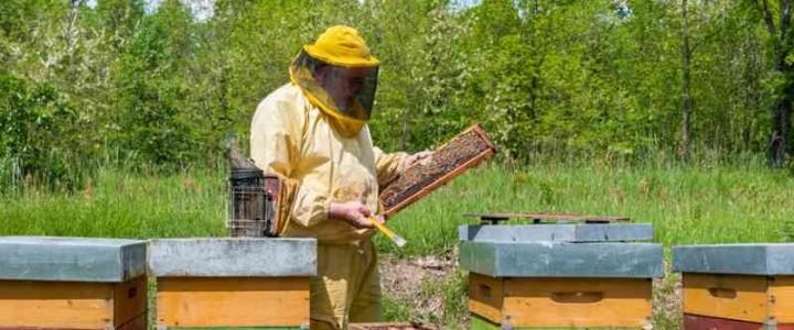 UF2012 Recolección, Extracción y Almacenamiento de la Miel