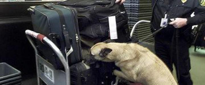 UF2743 Determinación de las Aptitudes del Perro para su Adiestramiento en la Detección de Sustancias Olorosas
