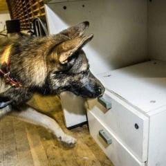 UF2744 Asociación del Olor de Sustancias para su Detección (Activa-Pasiva) por el Perro