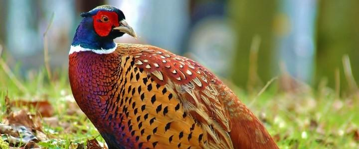 MF0281_2 Producción de Aves para Reproducción y Obtención de Carnes y Huevos